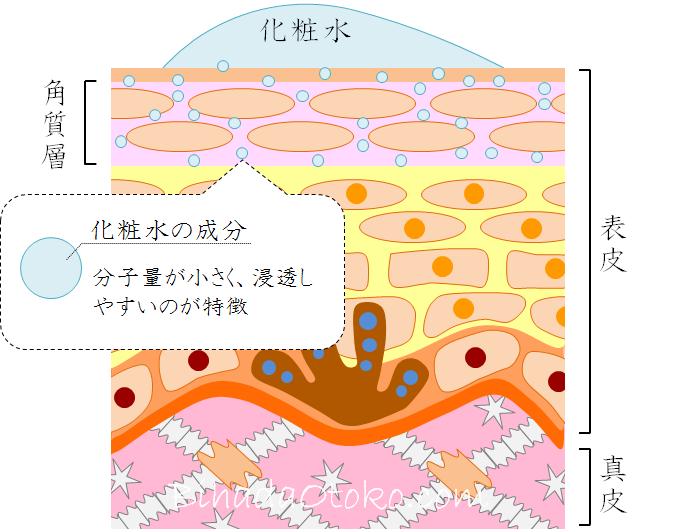 化粧水オススメの成分