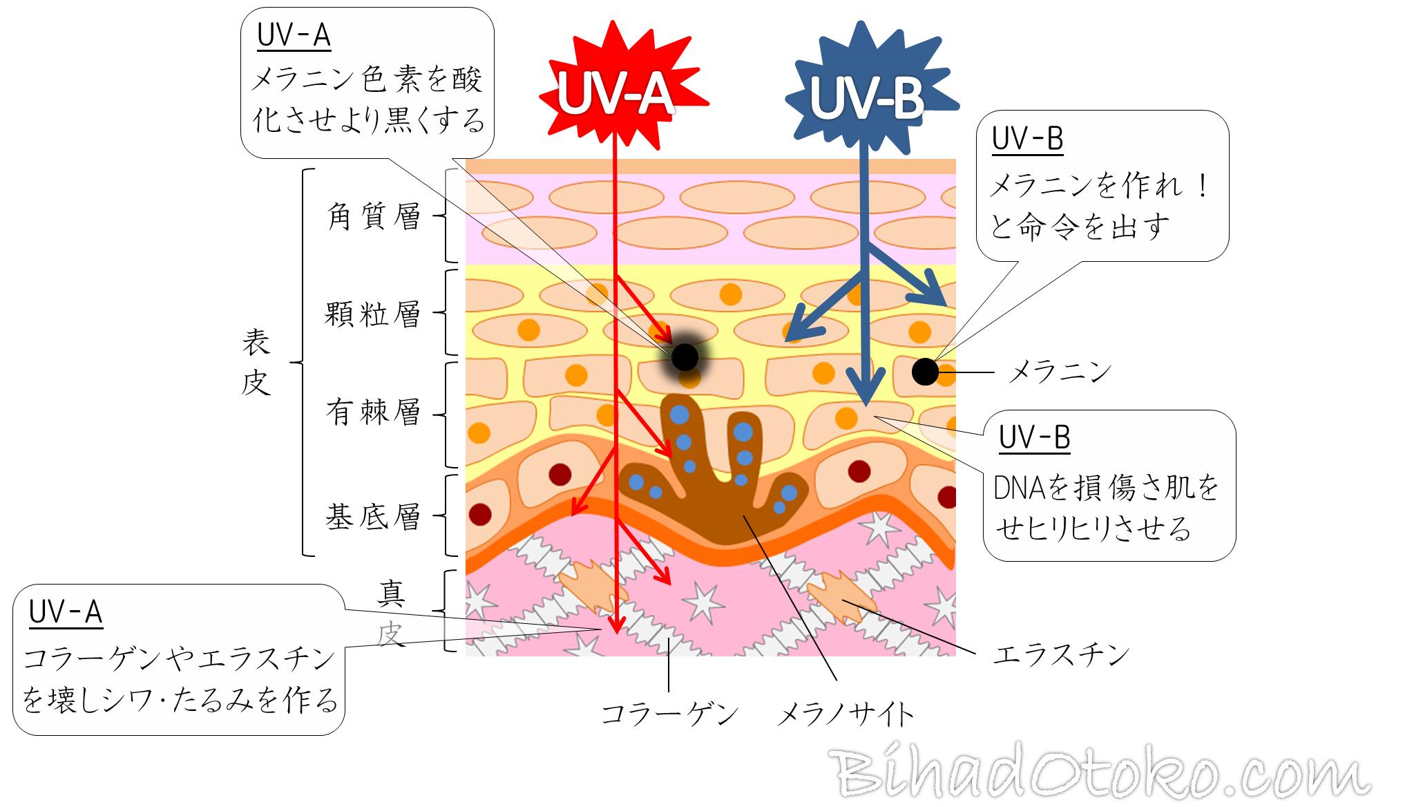 【専門家監修最新版】飲む日焼け止めサプリ徹底比較