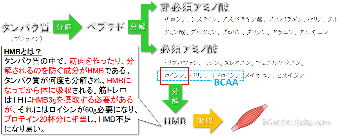 ビルドマッスルHMB効果なし?口コミ・副作用・最安値を専門家解説!