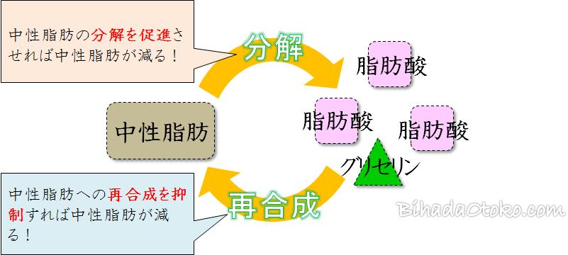 葛の花ダイエットサプリおすすめランキング【専門家監修の最新版】