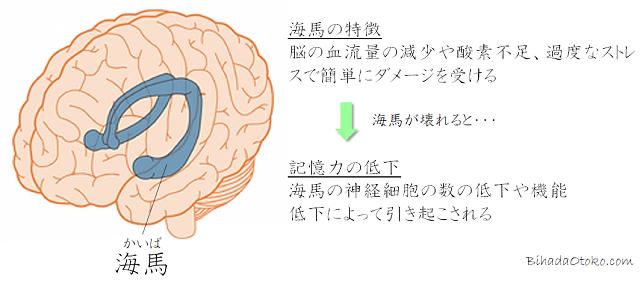記憶力サプリの口コミ&ランキング!記憶力サプリの効果を専門家解説
